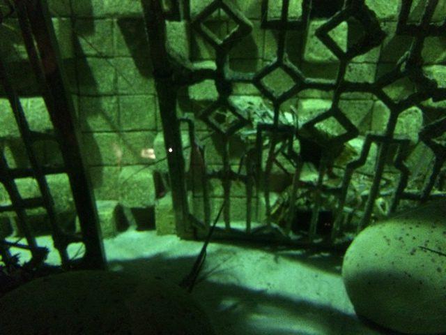 Disney Druise Dream Discover Atlantis 4