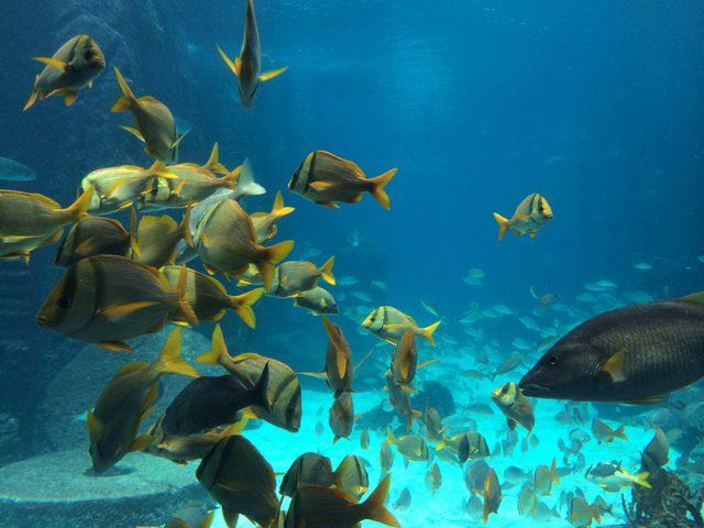 Disney Druise Dream Discover Atlantis 5