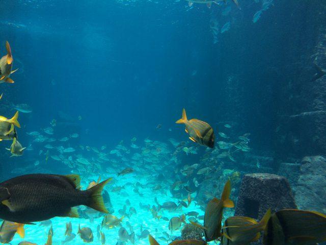 Disney Druise Dream Discover Atlantis 6