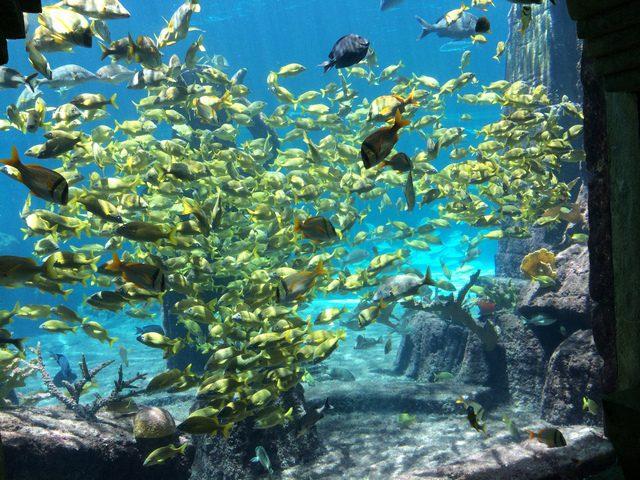 Disney Druise Dream Discover Atlantis 9