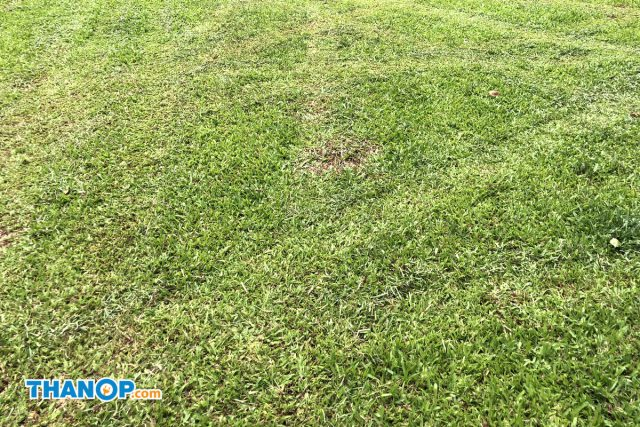Robot Lawn Mower Grass Before and After Mowing